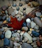 Autumn Leaf på stranden Arkivbild