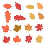 Autumn leaf pack. Leave fall in flat color with soft shadow isolated on white background. Maple leaf dry for decorate promotion banner and printing design vector illustration