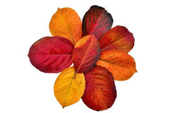 Autumn leaf palette Royalty Free Stock Photo