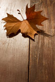 Autumn Leaf on a park bench Royalty Free Stock Image
