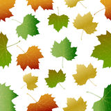 Autumn leaf pattern.Vector Stock Photography