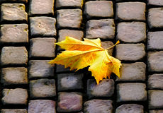 The autumn leaf on pavement Royalty Free Stock Photo