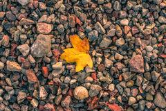 Autumn leaf on pebbles Royalty Free Stock Images