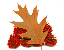 Autumn leaf and pine cones Royalty Free Stock Photos