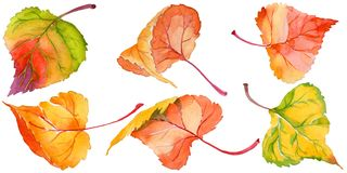 Autumn leaf of poplar in a hand-drawn watercolor style isolated. vector illustration