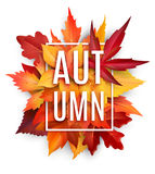 Autumn leaf poster with fall season foliage Stock Photography
