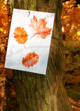 Autumn Leaf Prints Stock Images