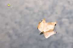 Autumn Leaf in a Puddle Royalty Free Stock Photography
