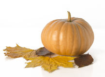 Autumn  leaf with pumpkin Stock Images