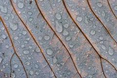 Autumn leaf with raindrops Royalty Free Stock Photo