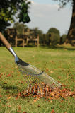 Autumn leaf raking Royalty Free Stock Photography