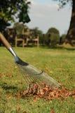 Autumn leaf raking. Photograph of a lawn rake raking up autumn leaves. picture orentation is portrait Royalty Free Stock Photography