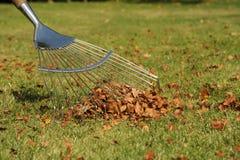 Autumn leaf raking. Photograph of a lawn rake raking up autumn leaves Stock Images