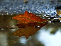 Autumn leaf reflected in a puddle of water. A fall leaf fallen into a puddle of water in the autumn season is reflected in the puddle water stock photo