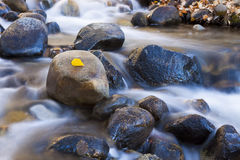 Autumn Leaf on River Stock Photography
