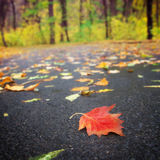 Autumn leaf. On the road Stock Photography