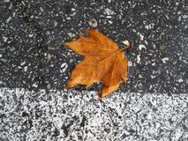 Autumn leaf on the road. Bright autumn leaf on the wet road Royalty Free Stock Images