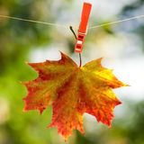 Autumn leaf on a rope Royalty Free Stock Image