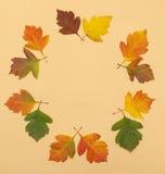Autumn leaf round rim. Autumn herbarium. foliage in form of round frame Royalty Free Stock Image