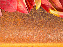 Autumn leaf on old rusty metal corroded texture, orange background Stock Image