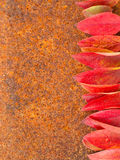 Autumn leaf on rust metall background Royalty Free Stock Photos