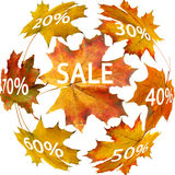 Autumn leaf for sale Royalty Free Stock Photo
