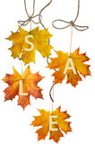 Autumn leaf for sale Royalty Free Stock Photos