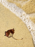 Autumn leaf on sand Royalty Free Stock Images