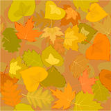 Autumn leaf seamless background Stock Images