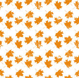 Autumn leaf seamless pattern. Autumn texture background Stock Photos