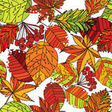 Autumn leaf seamless pattern. Vector illustration of autumn leaf seamless pattern on white background. Template for textile, wallpaper and web Royalty Free Stock Photos