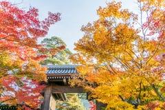Autumn Leaf Season Imágenes de archivo libres de regalías