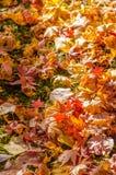 Autumn Leaf Season Imagen de archivo