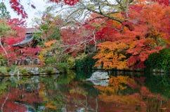 Autumn Leaf Season Fotos de archivo libres de regalías
