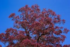 Autumn leaf season change Royalty Free Stock Image