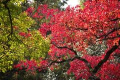 Autumn leaf season change Stock Photography