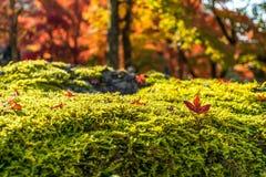 Autumn Leaf Season Royalty Free Stock Photos