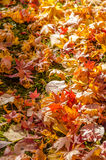 Autumn Leaf Season Stock Image