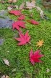 Autumn Leaf Season Royalty Free Stock Images