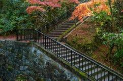 Autumn Leaf Season colorido Imagen de archivo libre de regalías