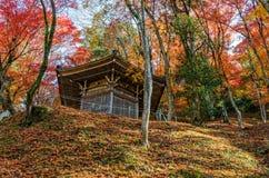 Autumn Leaf Season colorido Foto de archivo