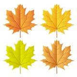 Autumn leaf set Royalty Free Stock Photo