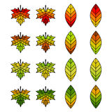Autumn Leaf Set for Designing. Simple Bright Autumn Leaf Collection for Designing Royalty Free Stock Photography