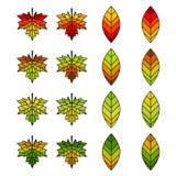 Autumn Leaf Set pour concevoir Photographie stock libre de droits