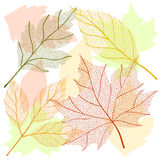 Autumn leaf set Stock Photography