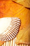 Autumn leaf and shell Royalty Free Stock Photos