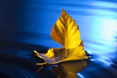 Autumn leaf ship in blue water.  Royalty Free Stock Photos