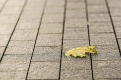 autumn leaf on a sidewalk royalty free stock photos