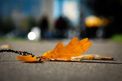 Autumn leaf on sidewalk Royalty Free Stock Images