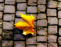 The autumn leaf on sidewalk Royalty Free Stock Photography